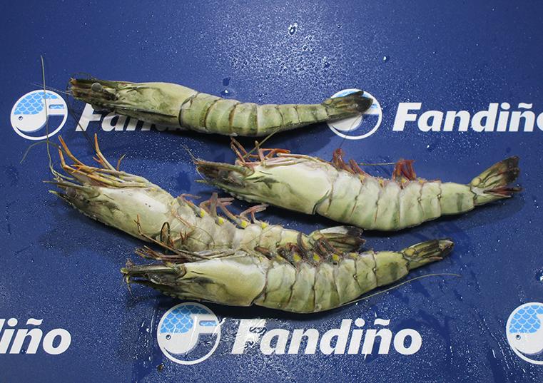 Langostino monodon 16 20 fandi o distribuidora de congelados for Cocinar tintorera